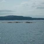 Killarney Bay